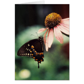 Echinacea Sipper Greeting Card