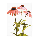 Echinacea Wall Art Stretched Canvas Prints