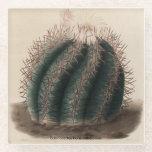 """Echinocactus horizonthalonius Cactus Coaster<br><div class=""""desc"""">Original image from Iconographie Descriptive des Cactees by French botanist Charles Antoine Lemaire. Published Paris,  1841-1847. Public domain image.</div>"""