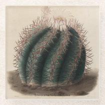 Echinocactus horizonthalonius Cactus Coaster