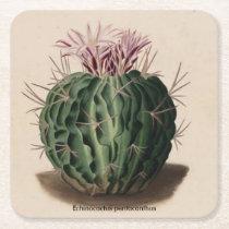 Echinocactus pentacanthus Cactus Coaster