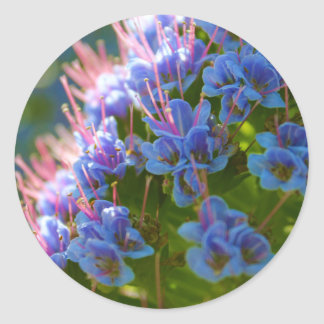 Echium Candicans Classic Round Sticker