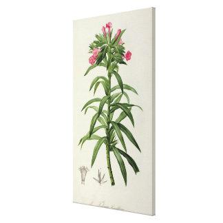 Echium Grandiflorum Canvas Print
