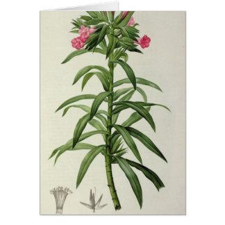 Echium Grandiflorum Card