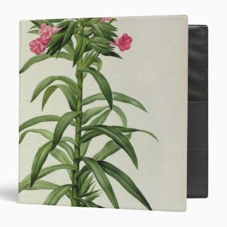 Echium Grandiflorum