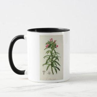 Echium Grandiflorum Mug