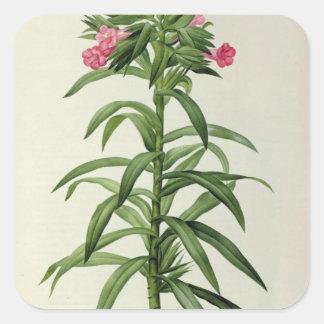 Echium Grandiflorum Square Sticker