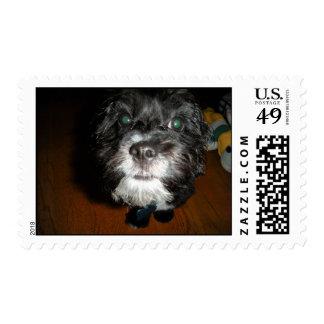 ecko stamp