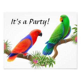 Eclectus Birds Invitation