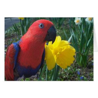 Eclectus Daffodil -- Large Card