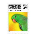 Eclectus masculino (pequeño) sello postal