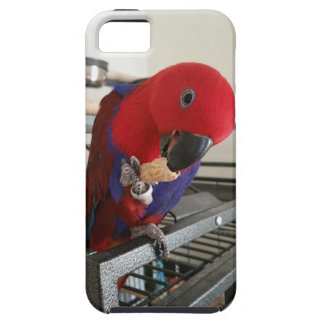 Eclectus Parrot Cell Phone Cover