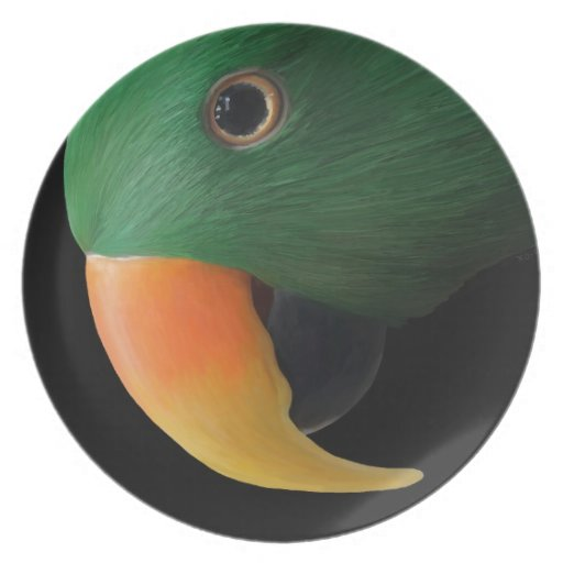 Eclectus Parrot Dinner Plates