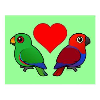 Eclectus Parrot Love Post Card