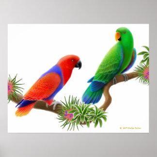 Eclectus Parrots & Bromeliads Print
