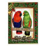 Eclectus Parrots Christmas Card