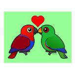Eclectus Parrots in Love Postcard