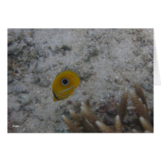 Eclipse Butterfly Fish Card