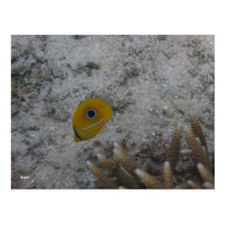 Eclipse Butterfly Fish Postcard