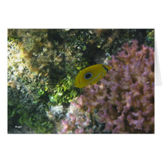 Eclipse Butterfly Fish Swimming By Coral Card