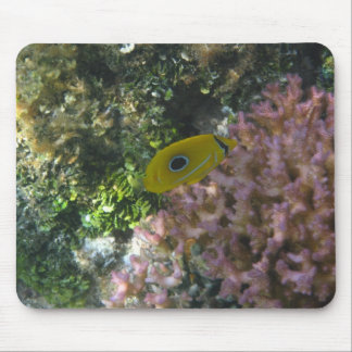 Eclipse Butterfly Fish Swimming By Coral Mouse Pad