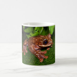 Ecnomiohyla Rabborum Rabbs Fringe Limbed Tree Frog Coffee Mug
