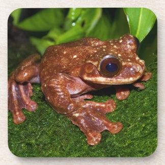 Ecnomiohyla Rabborum Rabbs Fringe Limbed Tree Frog Drink Coasters