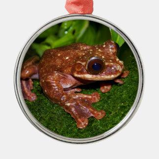 Ecnomiohyla Rabborum Rabbs Fringe Limbed Tree Frog Metal Ornament