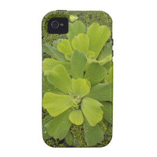 Eco green vibe iPhone 4 covers