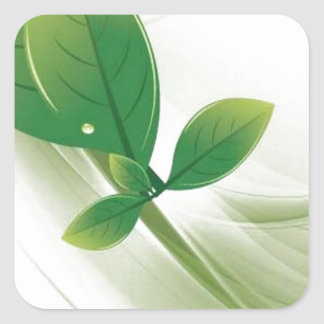 eco-leaves-vector square sticker