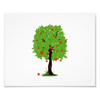 ecología design.png del manzano impresion fotografica