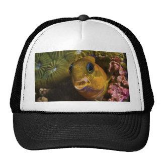 Ecsenius Midas Benny Fish Trucker Hats