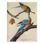 ectopistes migratorius ( Passenger pigeon ) Postcard