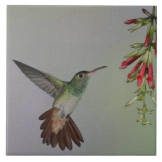 Ecuador, casa de campo del pájaro de Tandayapa. Ru Azulejo Cuadrado Grande