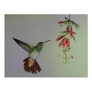 Ecuador casa de campo del pájaro de Tandayapa Ru Tarjetas Postales