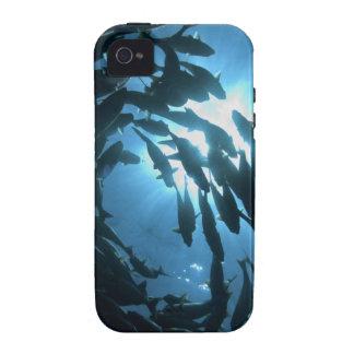 Ecuador Galapagos archipelago Wolf Island iPhone 4 Cases