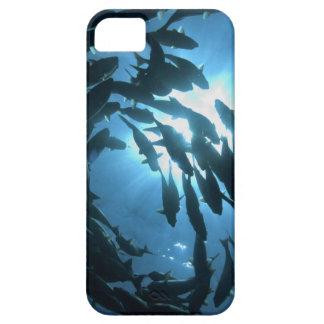 Ecuador, Galapagos archipelago, Wolf Island, iPhone SE/5/5s Case
