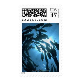 Ecuador, Galapagos archipelago, Wolf Island, Postage