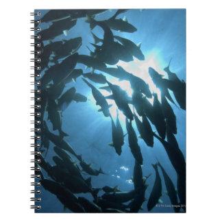 Ecuador, Galapagos archipelago, Wolf Island, Spiral Notebook