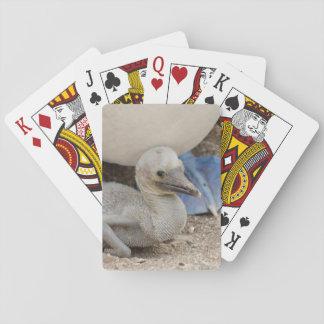 Ecuador, Galapagos, Espanola, Punta Suarez Playing Cards
