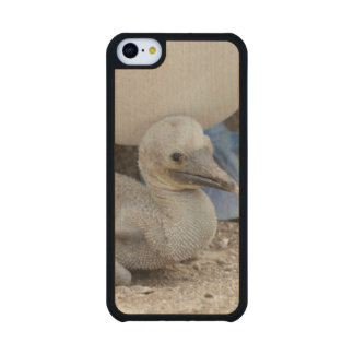 Ecuador, Galapagos, Espanola, Punta Suarez Carved® Maple iPhone 5C Case