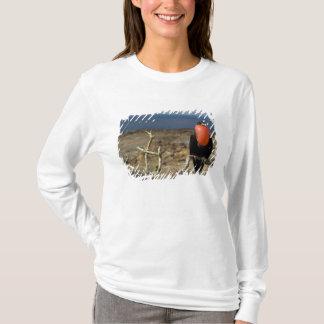 Ecuador, Galapagos, Genovesa Island. Prince T-Shirt