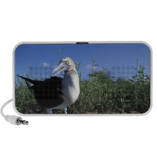 Ecuador, Galapagos Islands, Blue-Footed Boobie Mini Speaker