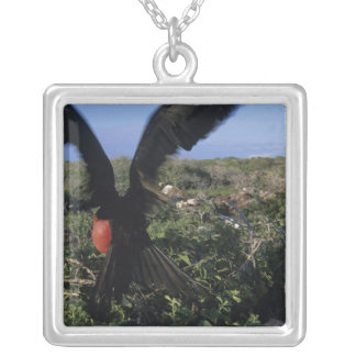 Ecuador, Galapagos Islands, Magnificent Silver Plated Necklace