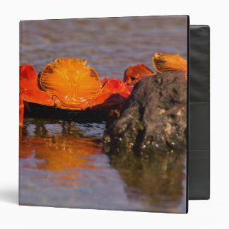 Ecuador, Galapagos Islands National Park, 2 3 Ring Binder