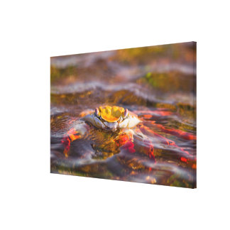 Ecuador, Galapagos Islands National Park, 2 Canvas Print