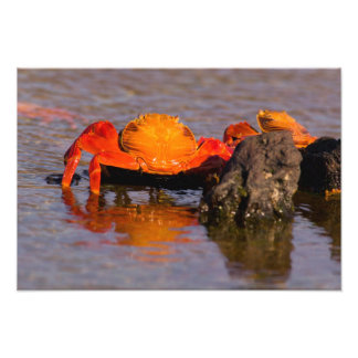 Ecuador, Galapagos Islands National Park, 2 Photo Print
