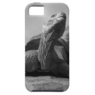 Ecuador, Galapagos Islands National Park, Santa iPhone SE/5/5s Case