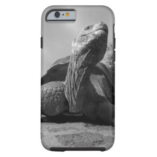 Ecuador, Galapagos Islands National Park, Santa Tough iPhone 6 Case