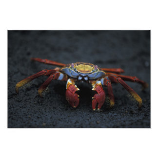 Ecuador, Galapagos Islands, Sally Lightfoot Photo Print